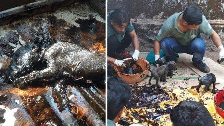Trovano otto cagnolini in queste condizioni: i volontari sono eroici
