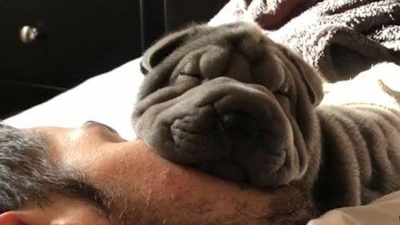 Adora usare il volto del padrone come un cuscino: la scena dolcissima