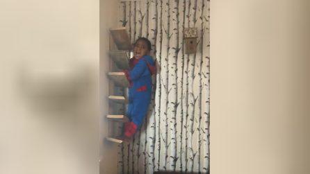 Il bimbo Spiderman si arrampica e resta bloccato: la reazione al rimprovero della madre