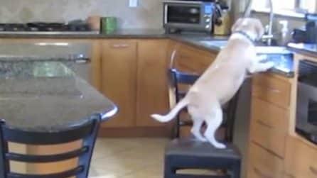 Il cane è solo in casa e ha fame: quello che fa è ingegnoso