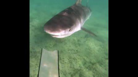 Il sub si immerge e trova davanti a sé un grosso squalo