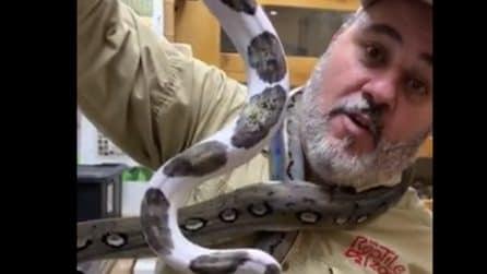 Mostra i suoi serpenti: uno di questi si avvolge attorno al collo mentre l'uomo sta parlando