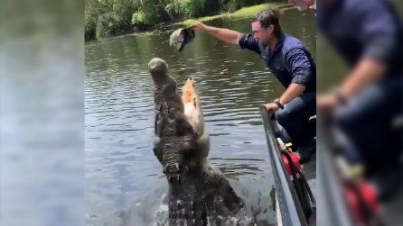 Avvicina il cappello al coccodrillo: la reazione del rettile mette i brividi