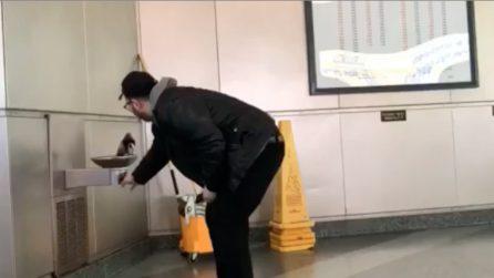 Il piccione assetato si poggia sulla fontana: il gesto gentile dell'uomo