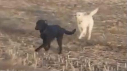 Cane scappa di casa la notte precedente, il giorno dopo i padroni non credono ai loro occhi