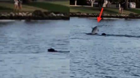 """Il cane nuota nel lago ma all'improvviso arriva un insolito """"amico"""""""