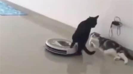 Il gatto è spaventato: l'arrivo dell'aspirapolvere rende la scena esilarante
