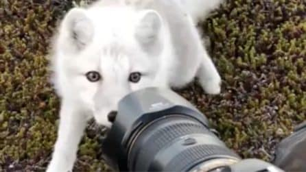 Si avvicina al fotografo: il tenero incontro con la volpe