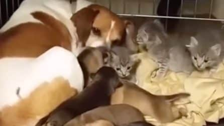 Mamma cane adotta dei cuccioli speciali: la scena tenerissima