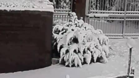 Imbiancata la provincia di Roma: neve ai Castelli Romani e Rocca di Papa