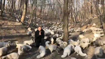 Destinate a diventare delle pellicce: la liberazione di 174 volpi bianche