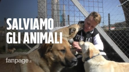 """La sfida di Vittorio, 16enne che salva cani e gatti: """"Aiutatemi a trovar loro una famiglia"""""""