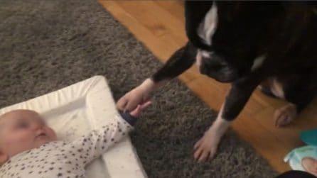 Il Bulldog è accanto al bimbo e compie un gesto dolcissimo