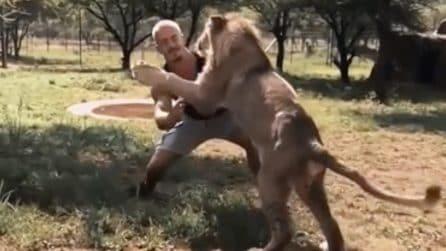 Il leone si avventa sul ragazzo che lo stava aspettando