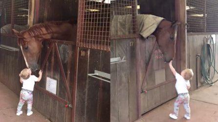 Il bimbo entra nella stalla e dispensa baci e carezze ai cavalli