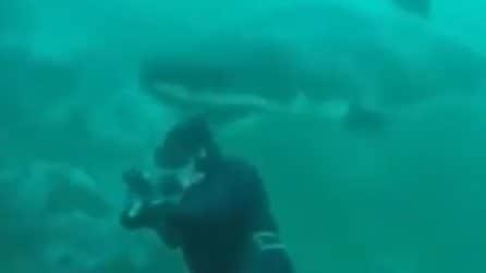 Lo squalo arriva alle spalle del sub cogliendolo di sorpresa