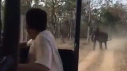 L'elefante comincia a rincorrere la jeep: terrore durante il safari