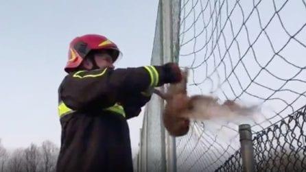 Il gufo si impiglia nella rete: il soccorso dei vigili del fuoco