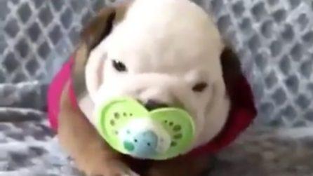 Il cucciolo più tenero e dolce che ci sia