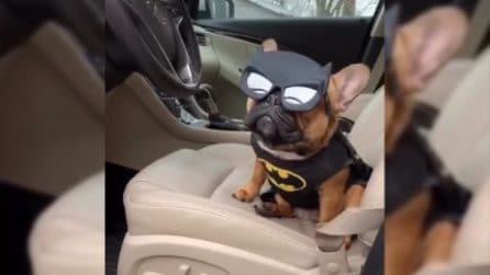 Il supereroe più dolce che ci sia e che tutti vorrebbero incontrare