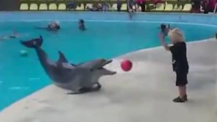 Quello che può fare un delfino è sensazionale: la bellissima scena con il bimbo