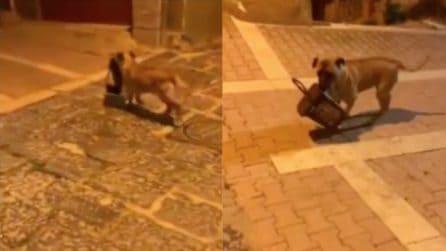 """Agrigento, scoperto il """"ladro"""" che ruba i cestini: il video lo incastra"""