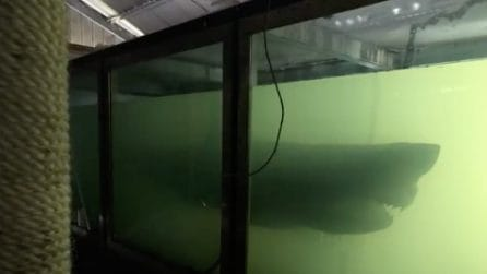 Entra in un parco acquatico abbandonato e scopre la carcassa di uno squalo in acqua