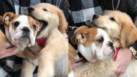 Sembrano due morbidi peluche: le dolci coccole tra cuccioli