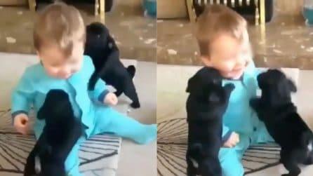 Un attacco di pura dolcezza: la scena tenerissima coi due cuccioli