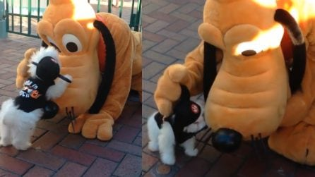 Cagnolino incontra Pluto ed è felicissimo: immagini tenerissime