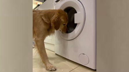 La padrona lava il coniglietto di peluche del cane: la sua reazione ti intenerirà