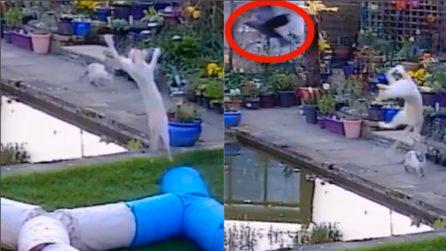 Il gatto fa un volo pazzesco per catturare l'uccello in volo