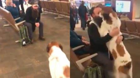 Il cane non riconosce subito il suo padrone, poi esplode di gioia quando lui lo chiama