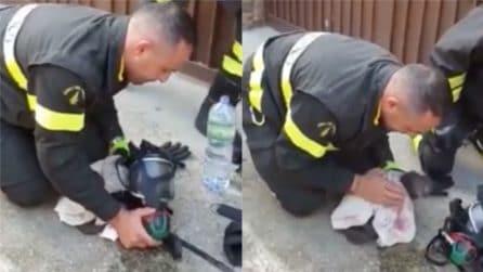 Il gatto è in fin di vita: il salvataggio dei vigili del fuoco