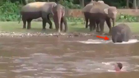 Il ragazzo finge di annegare: quello che fa l'elefante è fantastico