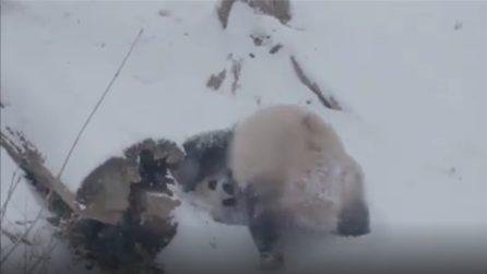 Mamma e figlio giocano insieme e si rotolano nella neve: le immagini tenerissime