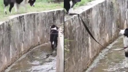 Il cagnolino non riesce più a risalire: per fortuna c'è la madre