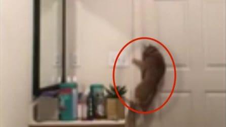 Il suo gatto riesce sempre e inspiegabilmente a uscire dal bagno: la bizzarra scoperta