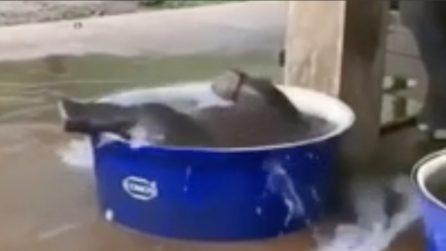 È l'ora del bagnetto: il piccolo Dumbo si tuffa nella vasca