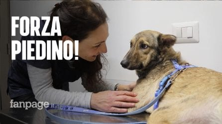 Aveva le zampette divorate dai topi: Piedino è il primo cane al mondo che vive con quattro protesi