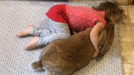 """La bimba gioca con il suo coniglio """"gigante"""": la scenetta comica e tenera"""