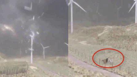 La tempesta distrugge la pala eolica: tre cavalli si trovano proprio lì
