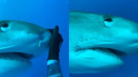 Sub accarezza lo squalo: la reazione del predatore è molto particolare