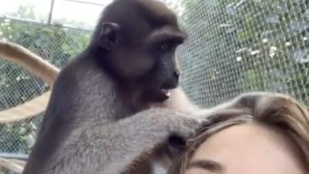 La scimmietta sale sulle spalle del ragazzo: quello che fa è sorprendente