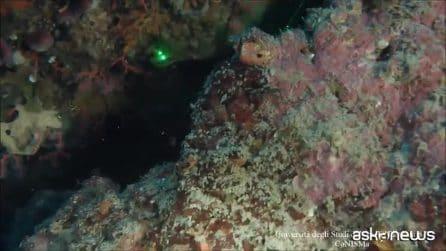 La prima Mappa Bionomica dei fondali marini di Ischia