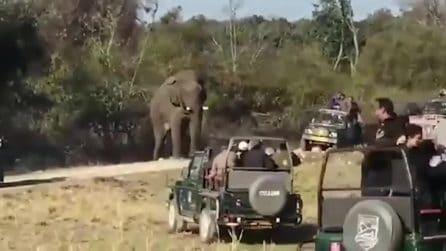 Terrore durante il safari: elefante tenta di ribaltare un veicolo