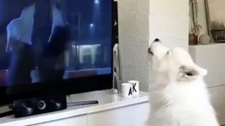 Guarda il cartone in tv con i lupi protagonisti: la reazione del cane è dolcissima
