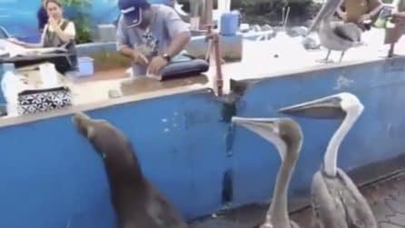 Quattro amici dal pescivendolo: la strana compagnia che aspetta il proprio turno