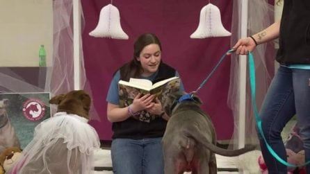 Organizzano un matrimonio tra due cani: il motivo è assolutamente commovente
