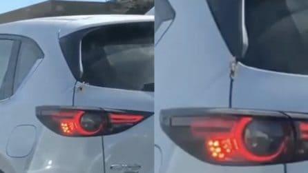 L'enorme ragno è sull'auto, poi la scena da brividi: sparisce in pochi secondi